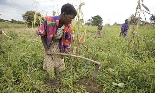 the role of women in agriculture Women are the backbone of the development of rural and national economies they comprise 43% of the world's agricultural labor force, which rises to 70% in some countries in africa, 80% of the agricultural production comes from small farmers, who are mostly rural women.